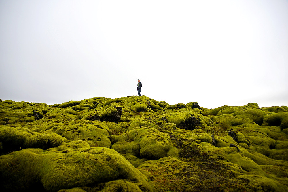 Standing high to realize these green moss field are almost border-less. - Photo credited to Hybrid.