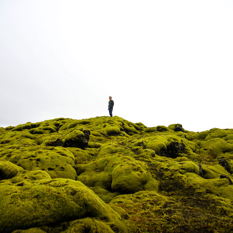 The Magical Field of Green Moss