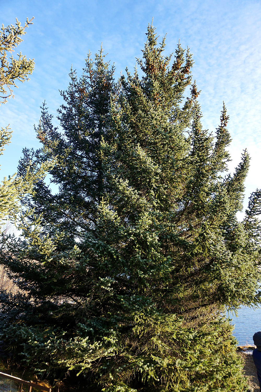 One of few green tree in the garden.