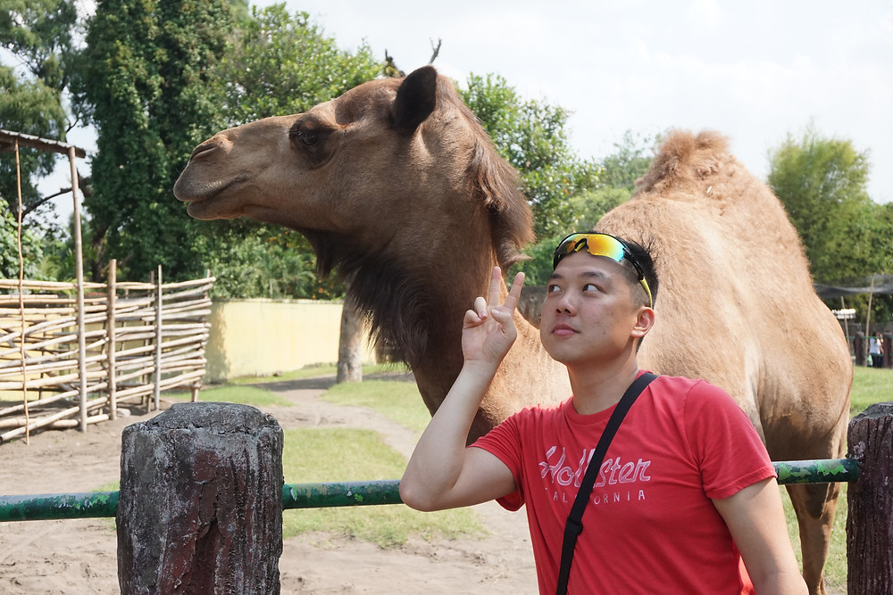 Close encounter with camel