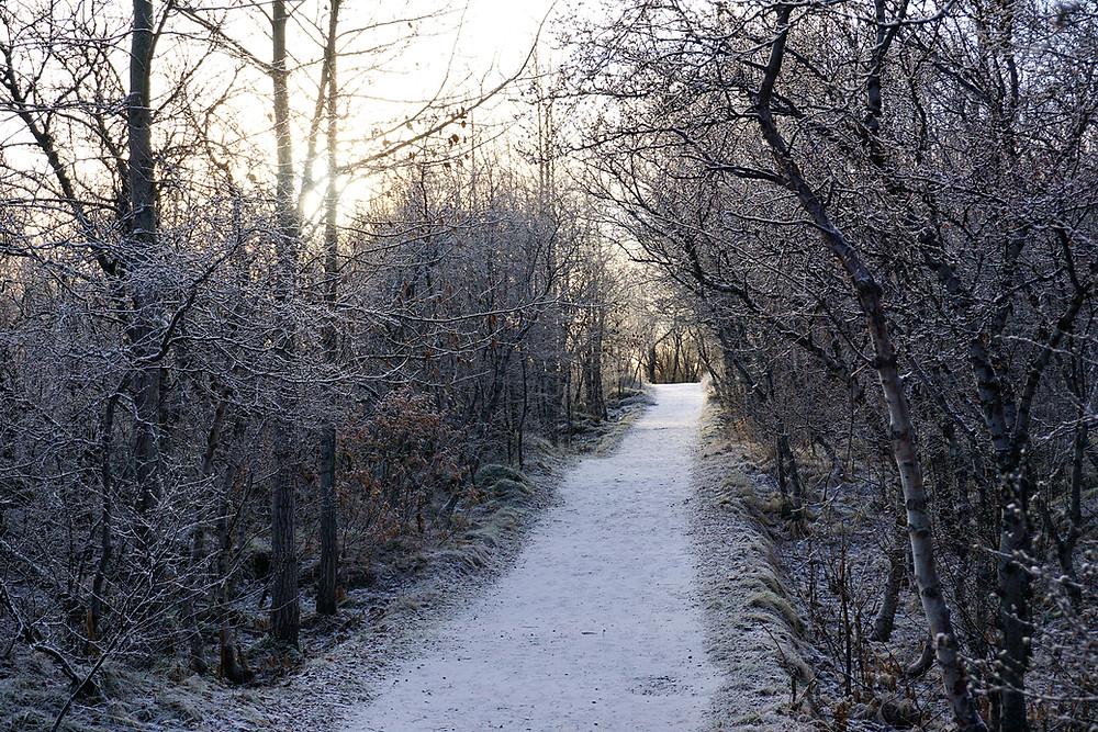 Love the walk path so much.