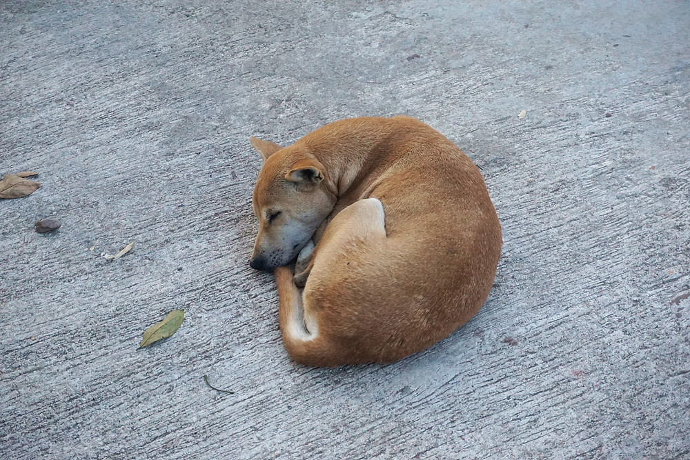Doggie sleep peacefully on the road.
