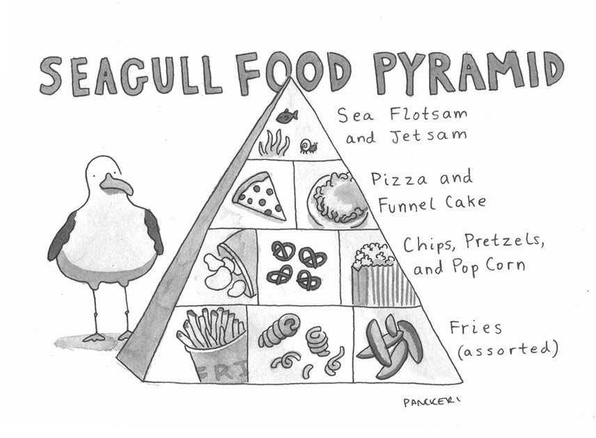 1365_seagullfoodpyramid-copy.jpg