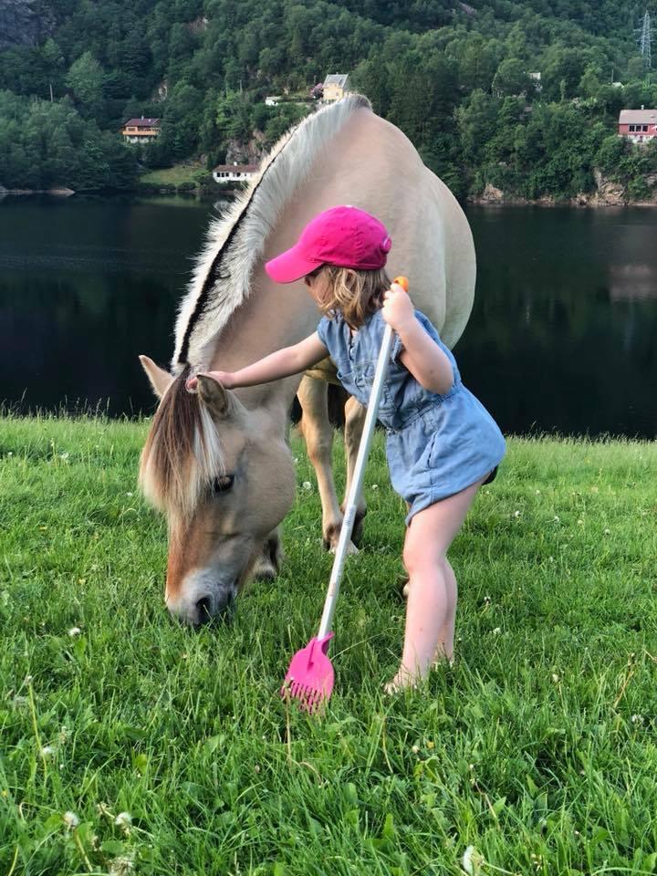 Ri og stelle hest på gård