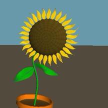 Animation Test   The Sunflower