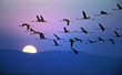 1975-swakopmund-flamingoes2