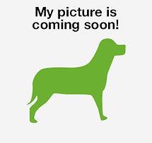 dog-coming-soon-2.jpg