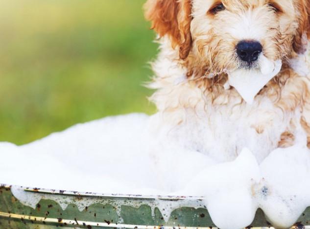 soin et santé chien