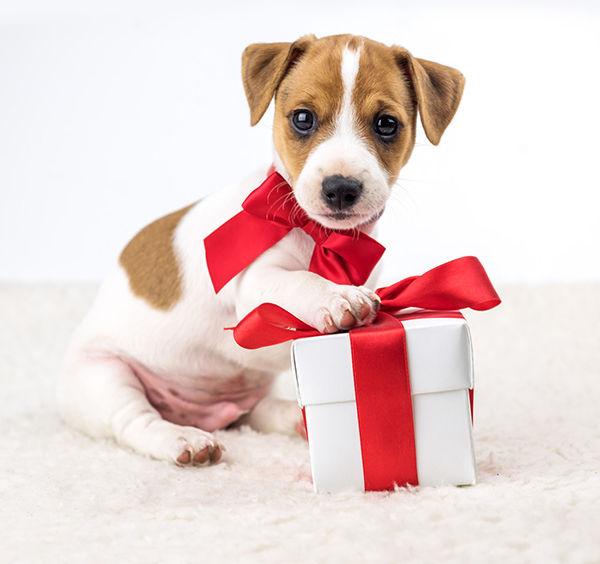cadeau-de-noel-pour-chien.jpg