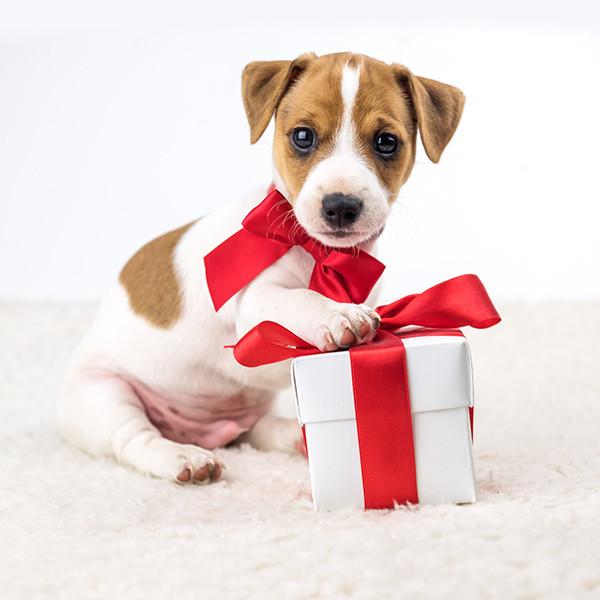 certificat-cadeau chien