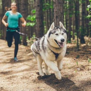 équipement sportif chien