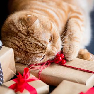 Certificat-cadeau chat