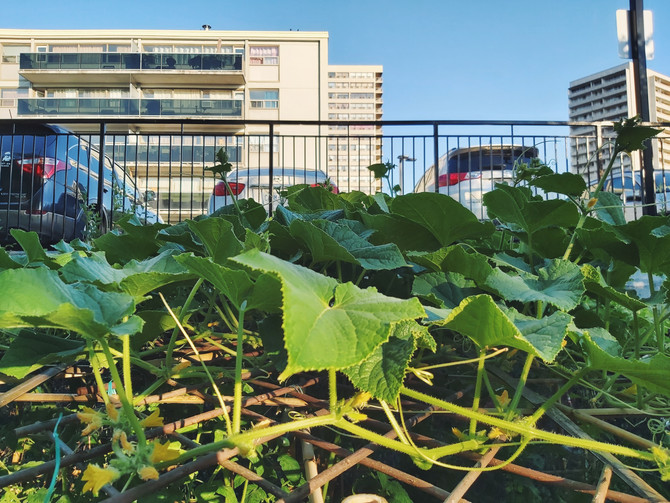 Why Urban Gardening? Building Food Security, Friendship and Community