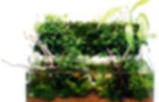 DOOA Kolkata, Terrarium, DOOA