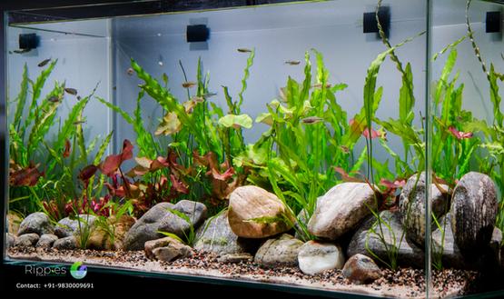 The Rainbow Aquarium