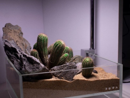 Mini Cactus Terrarium