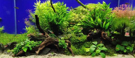 Underwater Grove