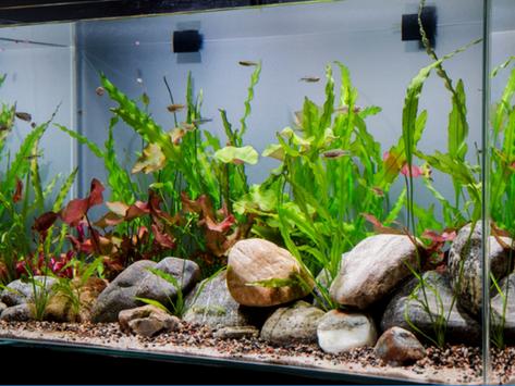 Non CO2 aquarium a.k.a Low Tech Planted Aquarium