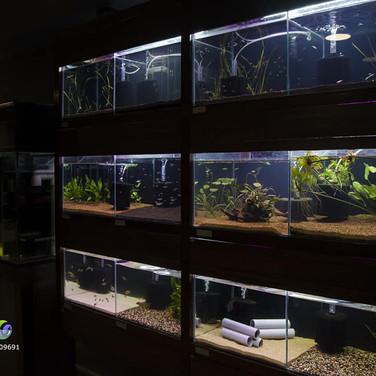 Ripples Fish Tanks.jpg