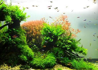Nature Aquarium.jpg