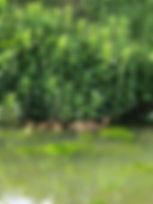 oliver week 8.jpg