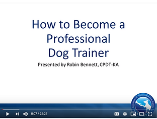 How to become a professional dog trainer