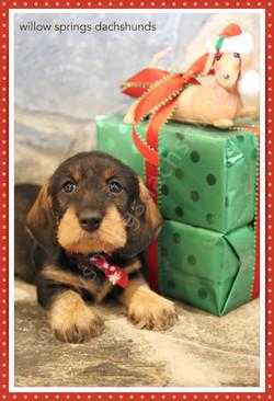 holiday-puppygift