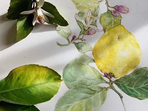 Lemons & Liqueurs
