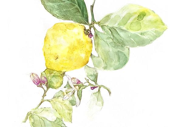 Leafy Lemon