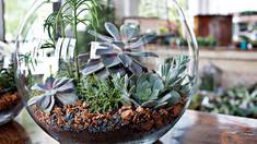Vamos humanizar os ambientes com plantas?