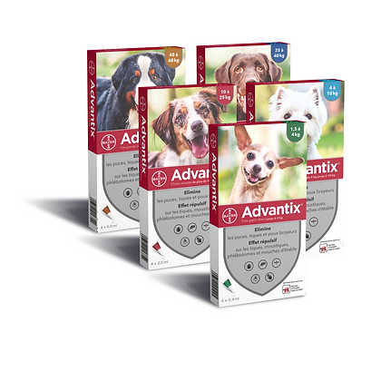 Advantix® kutyáknak 4 pipetta