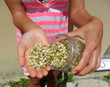 SPROUTING 101 FOR BEGINNERS