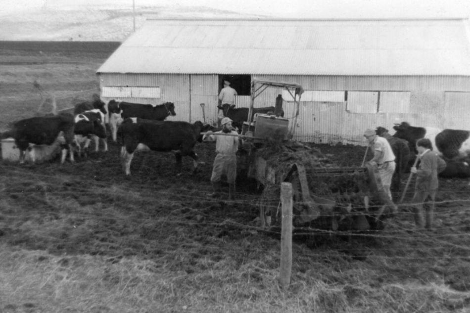 הרפת הראשונה 1954