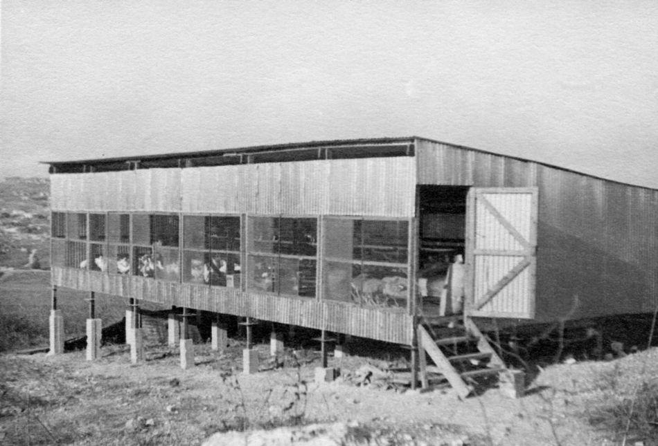 הלול הראשון 1951