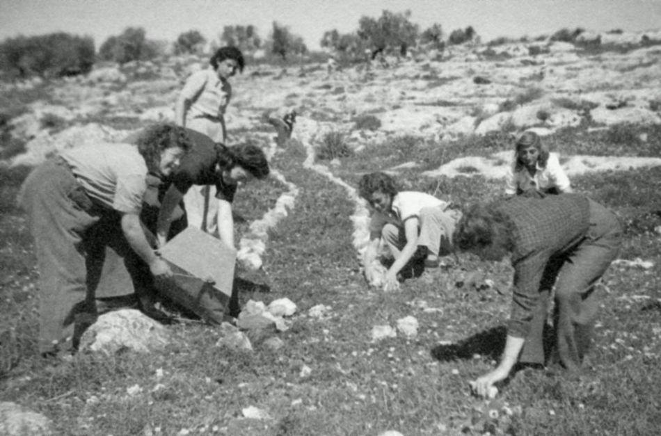חברות עושות שביל עם אבנים ביום העליה 1949