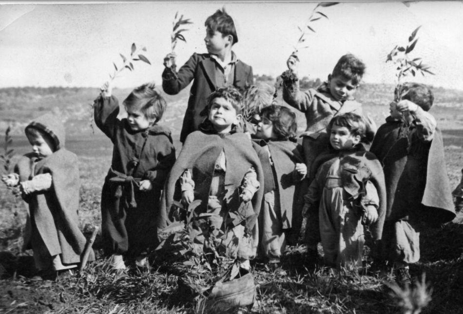 טו בשבט הילדים שותלים 1951