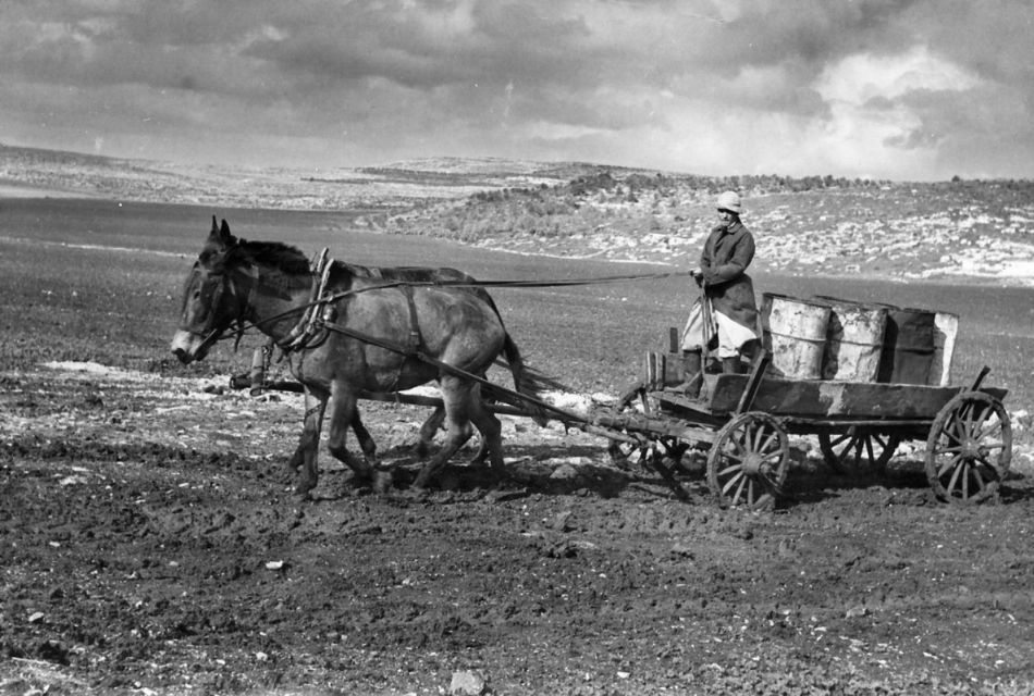 הובלת אשפה למזבלה 1955