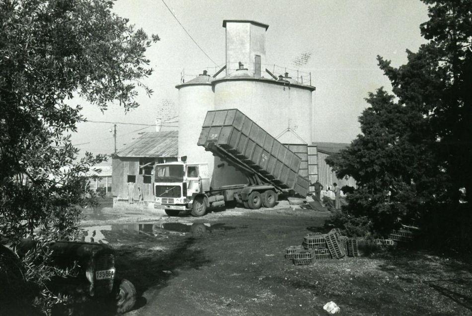 שופכים גרעיני חיטה לתוך האסם 1970