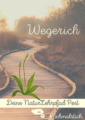 wegerich Deckblatt.png