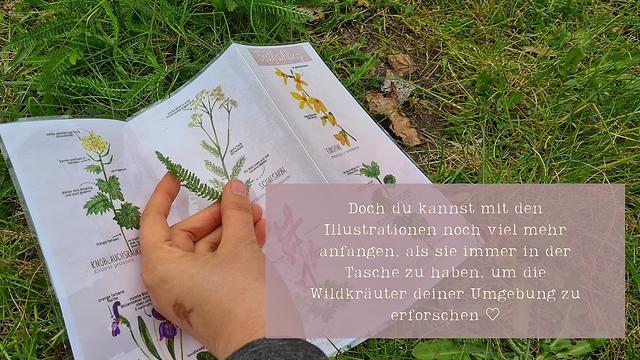 1 Kräuter Faltblatt.png