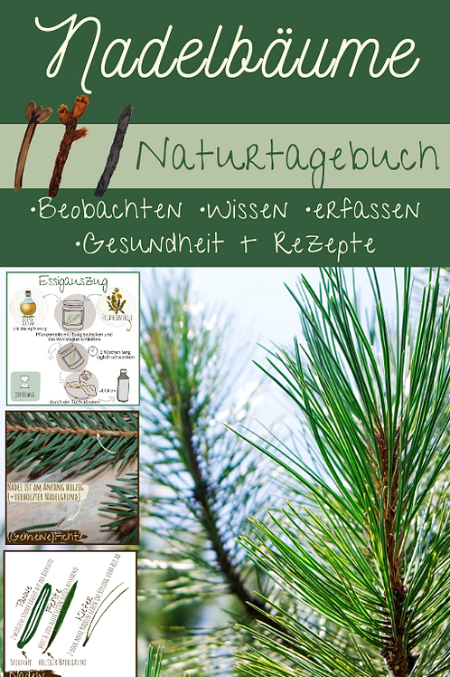 Nadelbäume & Heilpflanzenrezepte
