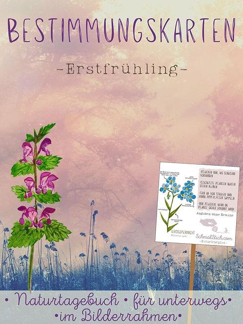 Bestimmungskarten Erstfrühling