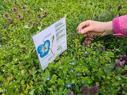 Pflanzenbestimmung & Ideen