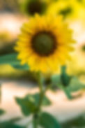 jason-leung-xt-8Bj1lR2Y-unsplash (1).jpg