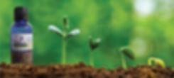 petaltone plantuta.jpg