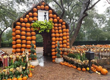 Halloween to do List: The Dallas Arboretum and Botanical Garden
