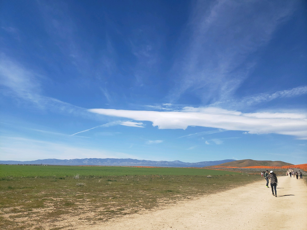 Antelope Valley California Poppy Reserve in the distance - April 2019 by Yaa Asantewaa Faraji
