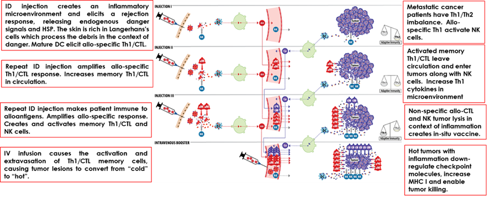 stimvax mechanism.png