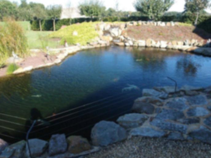 this pond built using a Koi Fish Pond Ki