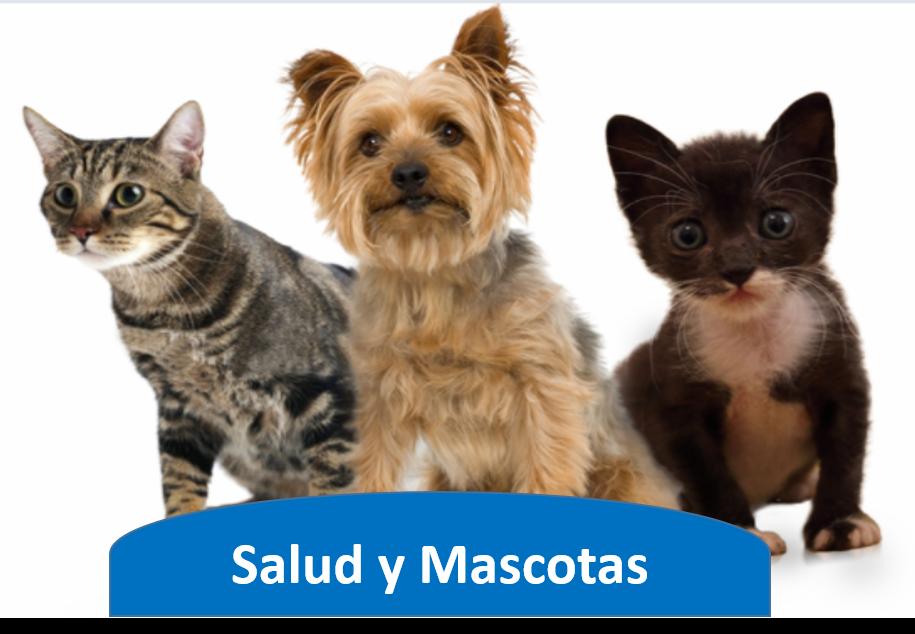 Salud y Mascotas